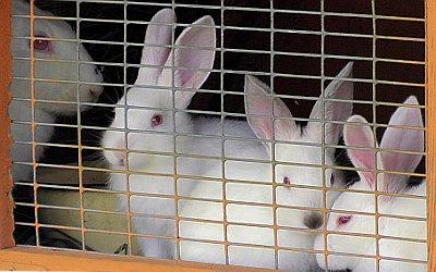 Кролики на учебной ферме